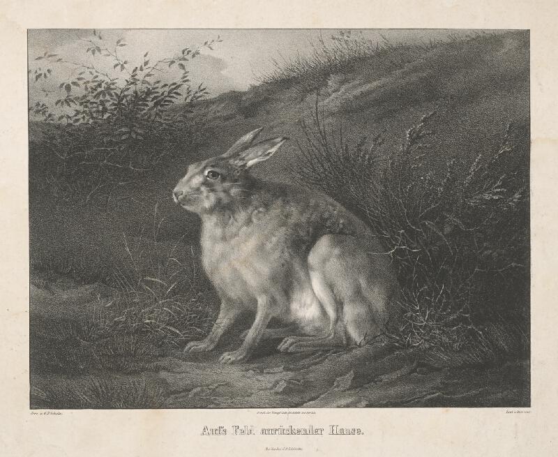 Wilhelm Devrient - Zajac
