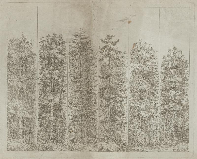 Stredoeurópsky maliar z 19. storočia – Šesť druhov stromov, okolo 1850, Galéria mesta Bratislavy