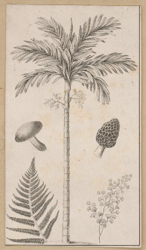 Stredoeurópsky maliar z 19. storočia - Rastliny a huby