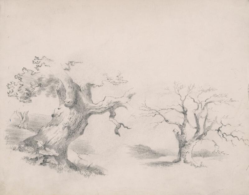 Stredoeurópsky grafik z 19. storočia - Štúdia stromov