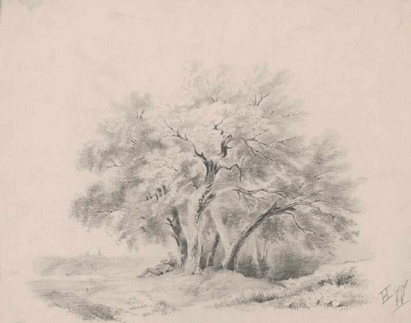 Stredoeurópsky grafik z 19. storočia - Skupina stromov