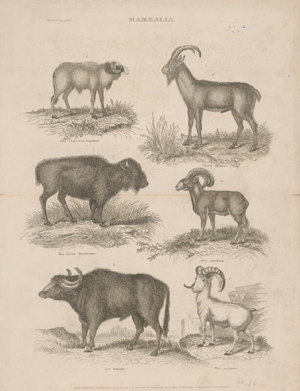 Friedrich Rudolf Meyer - Biologické tabuľky