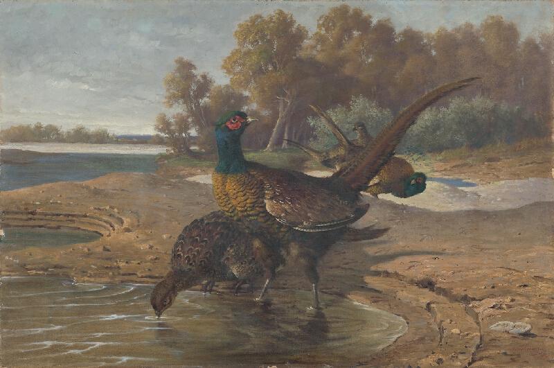 Friedrich Carl von Scheidlin - Bažanty pri vode