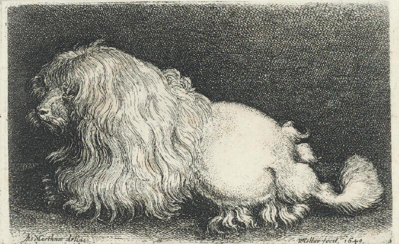 Václav Hollar, A. Maetham - Boloňský psík