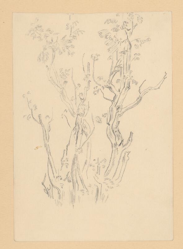 Emil Makovický - Štúdia stromov