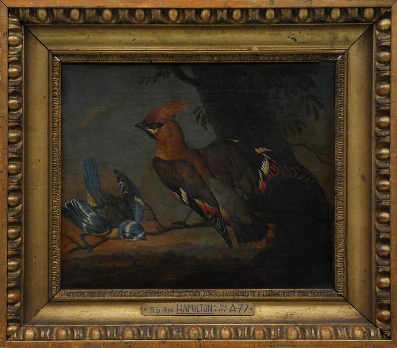 Philipp Ferdinand de Hamilton - Studie ptáků I
