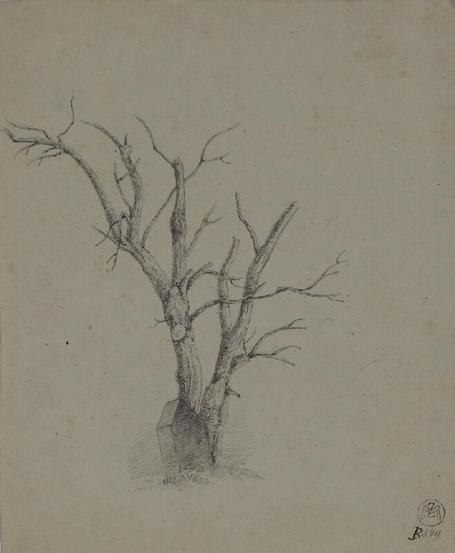 Mořic (Mauritz) Vilém Trapp - studie stromu