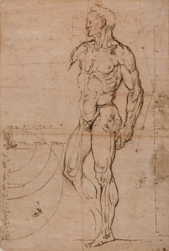 Bartolomeo Passarotti - podle - Studie mužského těla