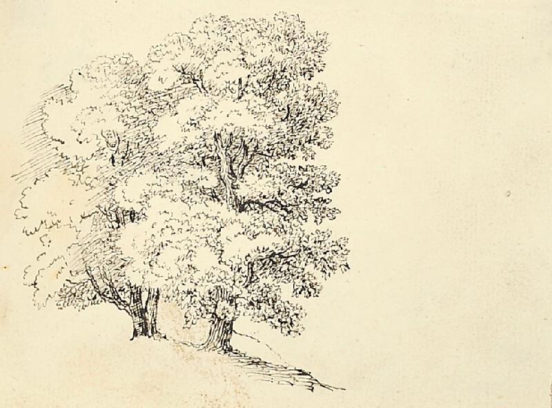 Bedřich Silva Tarouca - Studie skupiny stromů