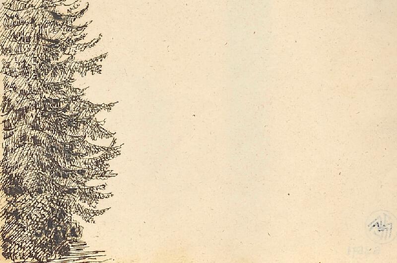 Bedřich Silva Tarouca - Studie jehličnatého stromu