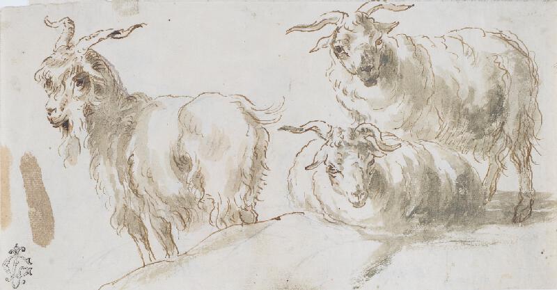 Giovanni Benedetto Castiglione zv. Il Grechetto - Ovce