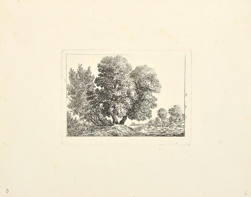 Bedřich Silva Tarouca - stromy