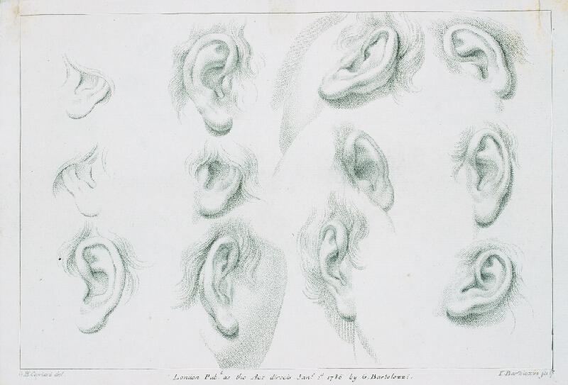Giovanni Battista (Giuseppe ) Cipriani - Studie ucha