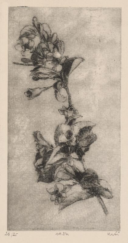 Fero Kráľ – Rozkvitnutá ratolesť, 1954, Stredoslovenská galéria