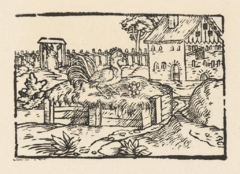 Nemecký grafik z 2. polovice 16. storočia - Kohút na smetisku