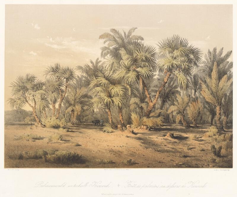 Karol Ľudovít Libay - Palmový les poniže Kenneh