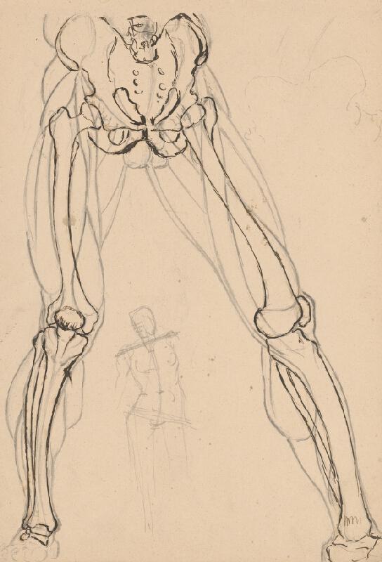 Ján Fadrusz – Štúdia kostry a svalstva nôh, 1885 – 1890, Slovenská národná galéria