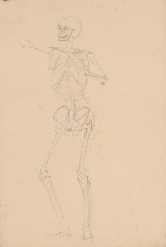 Ján Fadrusz - Štúdia ľudskej kostry