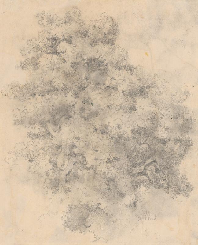 Ladislav Mednyánszky - Štúdia stromu