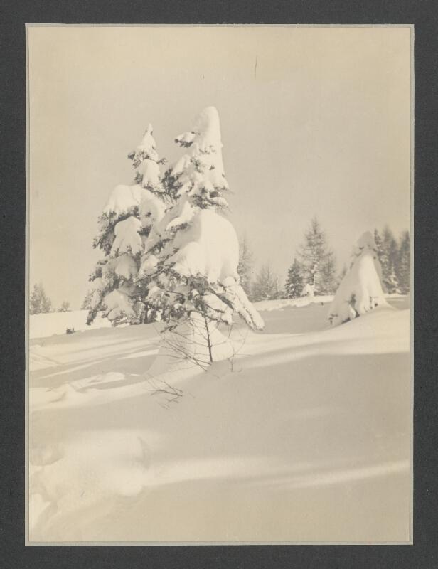 Juraj Jurkovič - Zaviate stromy