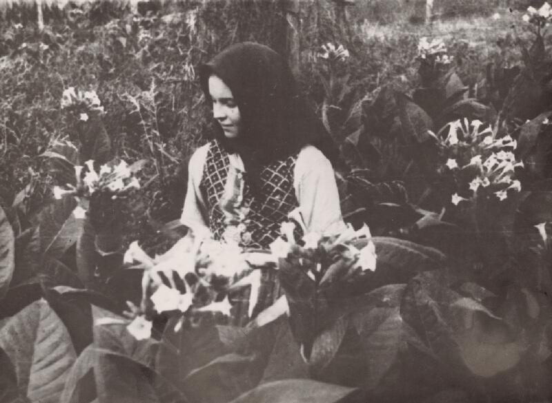 Irena Blühová - Tabak v kvete. Najmladšia tabačiarka