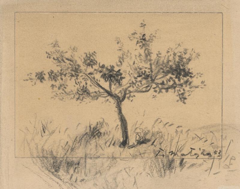 Peter Matejka - Štúdia stromu