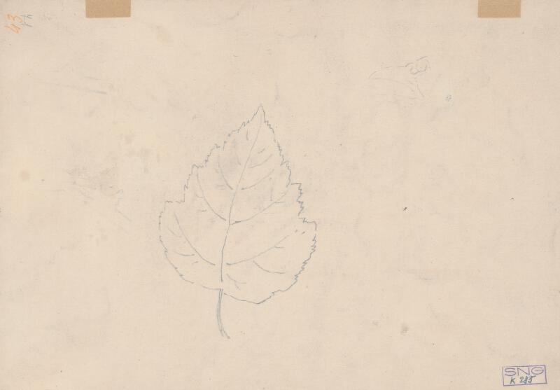 Friedrich Carl von Scheidlin - Štúdia listov