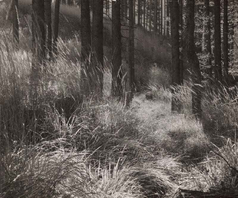 Martin Martinček - Vnútro lesa