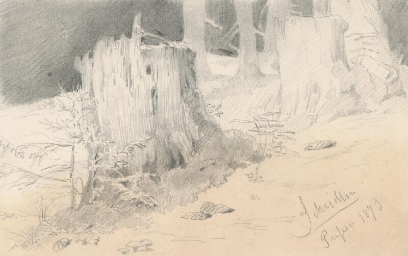Friedrich Carl von Scheidlin - Štúdia horských pňov