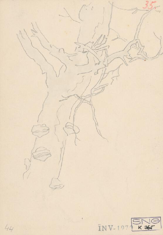 Friedrich Carl von Scheidlin - Štúdia kmeňa stromu s konármi a hubami