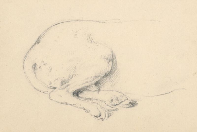 Friedrich Carl von Scheidlin - Štúdia sediaceho psa - detail