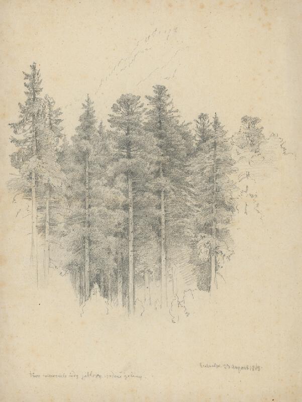 Jan Novopacký – Štúdia ihličnatých stromov
