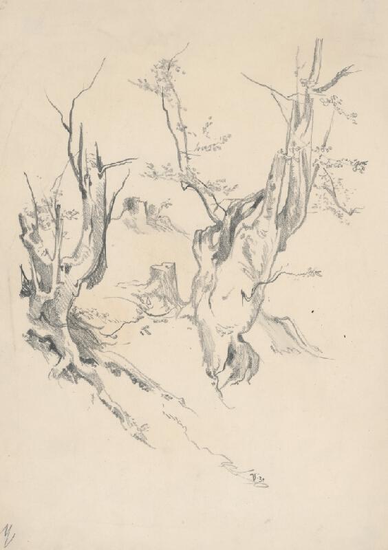 Jaroslav Vodrážka - Kresba kmeňov starých stromov