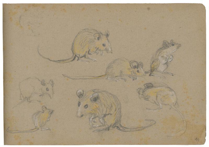 Margita Czóbelová – Náčrty myší v rôznych pozíciách