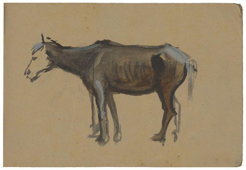 Margita Czóbelová - Štúdia koňa