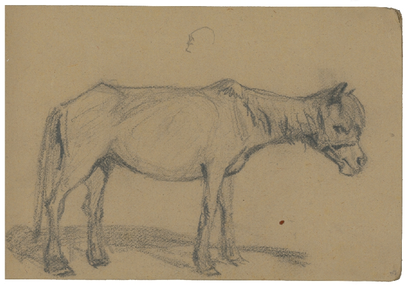 Margita Czóbelová - Náčrt koňa