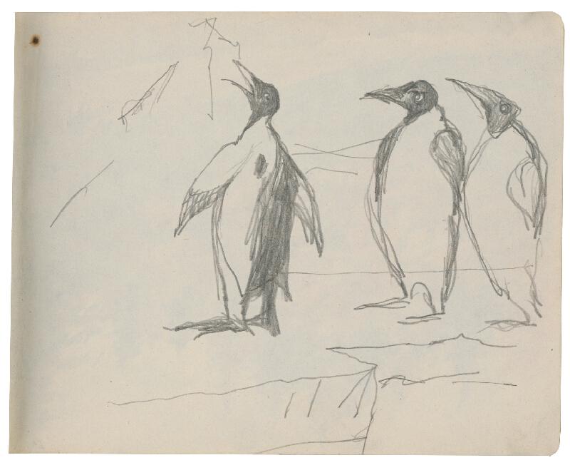 Margita Czóbelová - Náčrt tučniakov