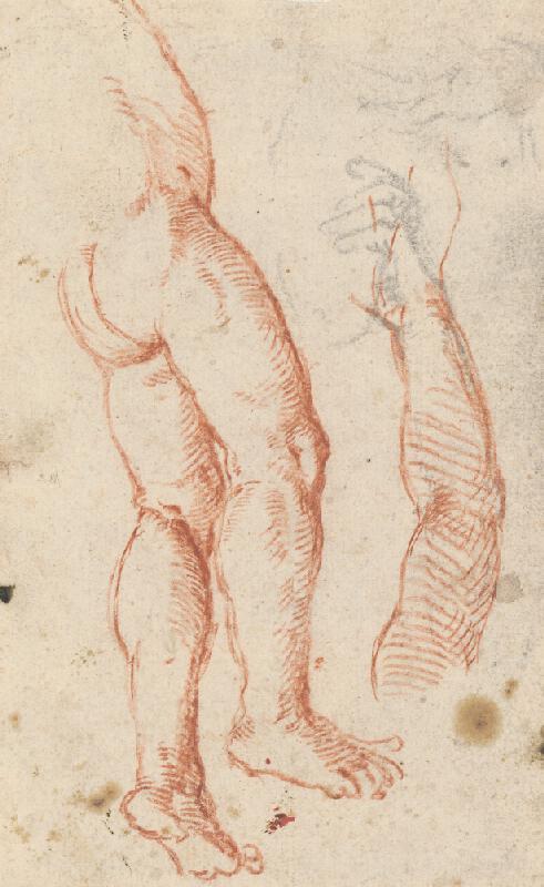 Stredoeurópsky maliar z 18. storočia - Anatomická štúdia