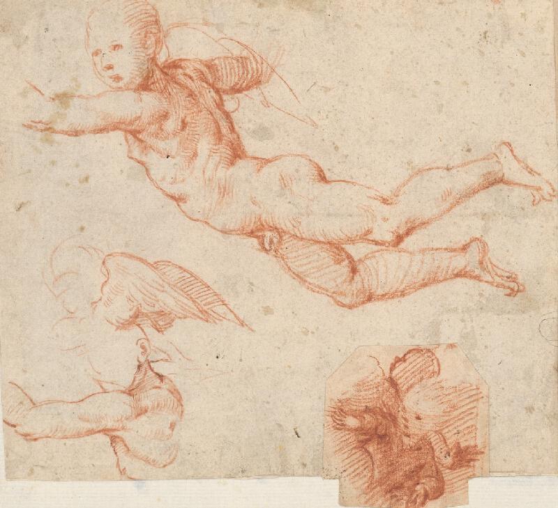 Stredoeurópsky maliar z 18. storočia - Anatomická štúdia vznášajúceho sa chlapčenského aktu