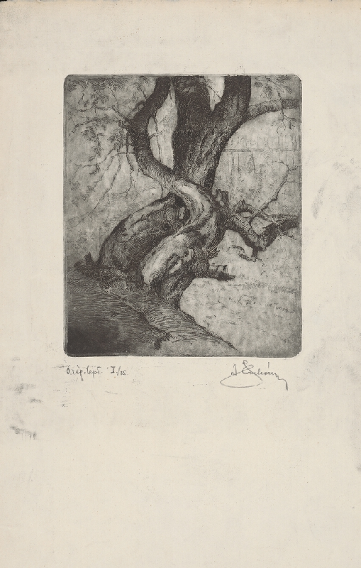 Alojz Struhár - Stromy