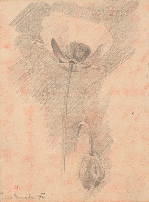 Milan Thomka Mitrovský - Štúdia kvetov