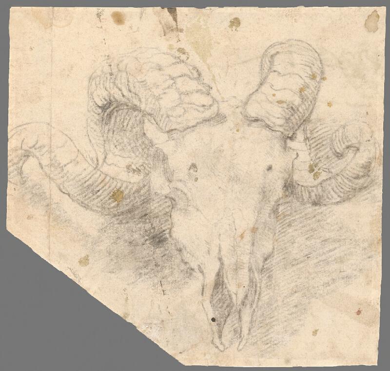 Francúzsky majster z 18. storočia – Štúdia hlavy kozorožca