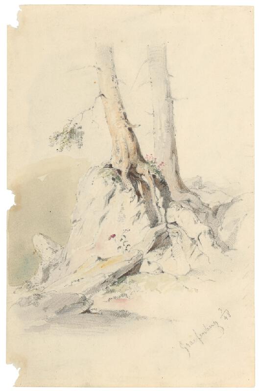 Friedrich Carl von Scheidlin - Štúdia kmeňov stromov vrastených do skál