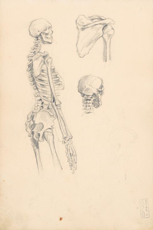 Jaroslav Augusta - Štúdia ľudskej kostry