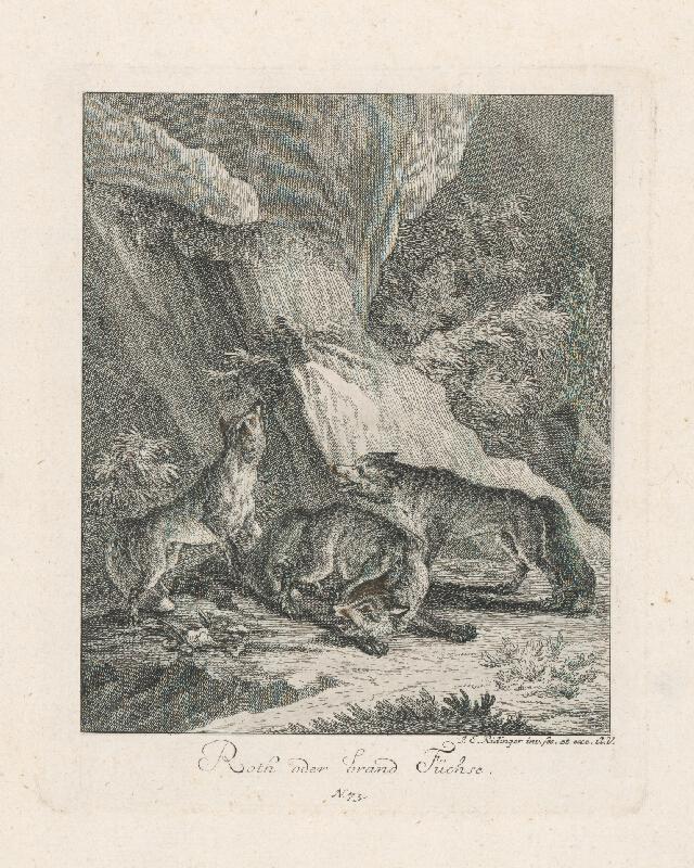 Johann Elias Ridinger - Líšky