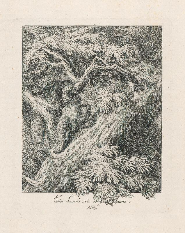 Johann Elias Ridinger - Loviaci rys