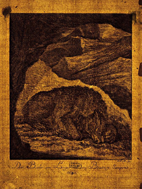 Johann Elias Ridinger - Spiaci medveď