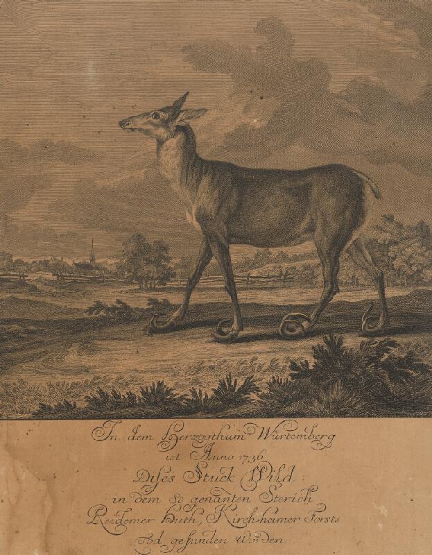 Johann Elias Ridinger - Srnec