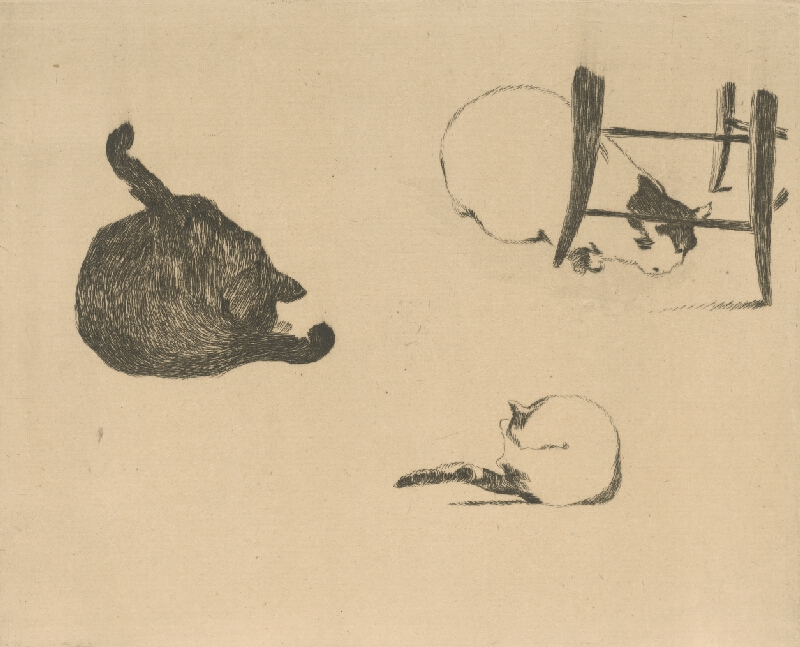Edouard Manet - Tri mačky