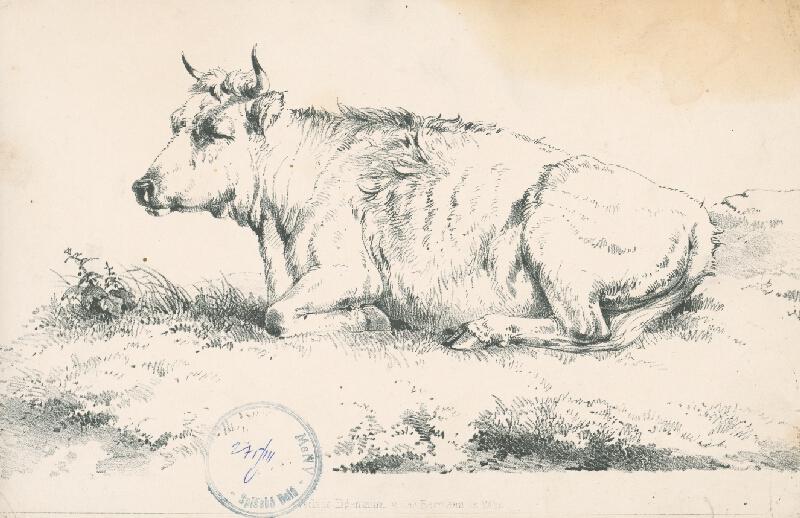 Stredoeurópsky autor z 2. polovice 19. storočia - Krava